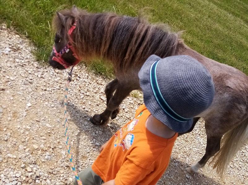 Ponys für Kinder | © Sarah Kröpfl