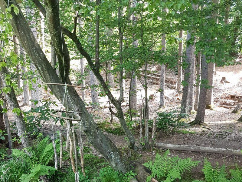 Wald | © Daniela Bick