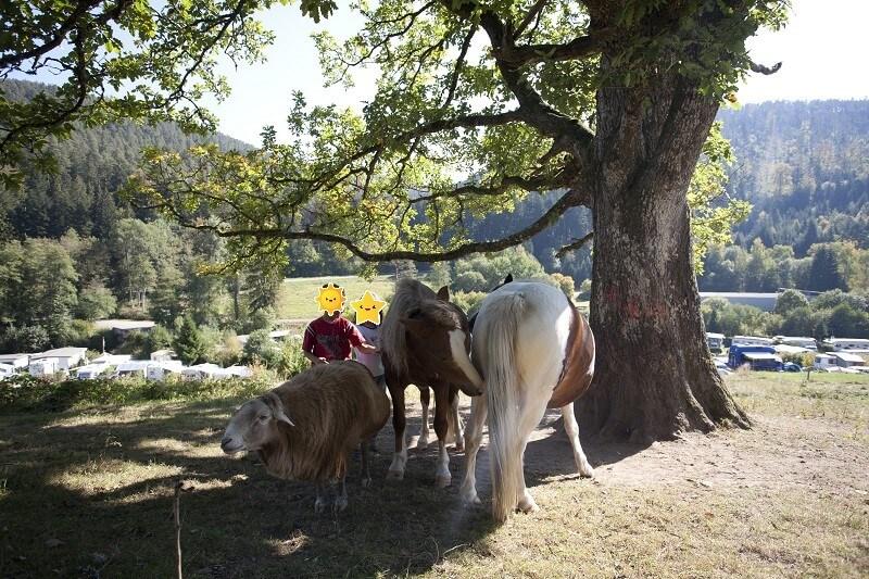 Campingplatz Kleinenzhof - Schaf und Pferde mit Kindern die streicheln